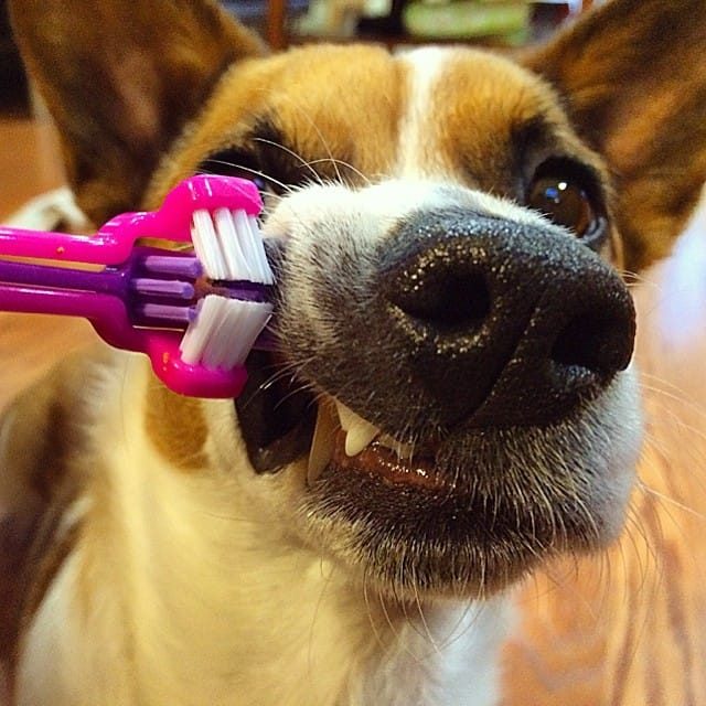 oral hygiene basics for dogs
