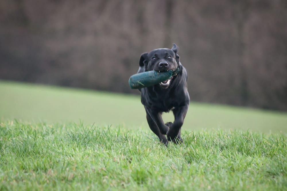 Why You Should Adopt: Black Dogs