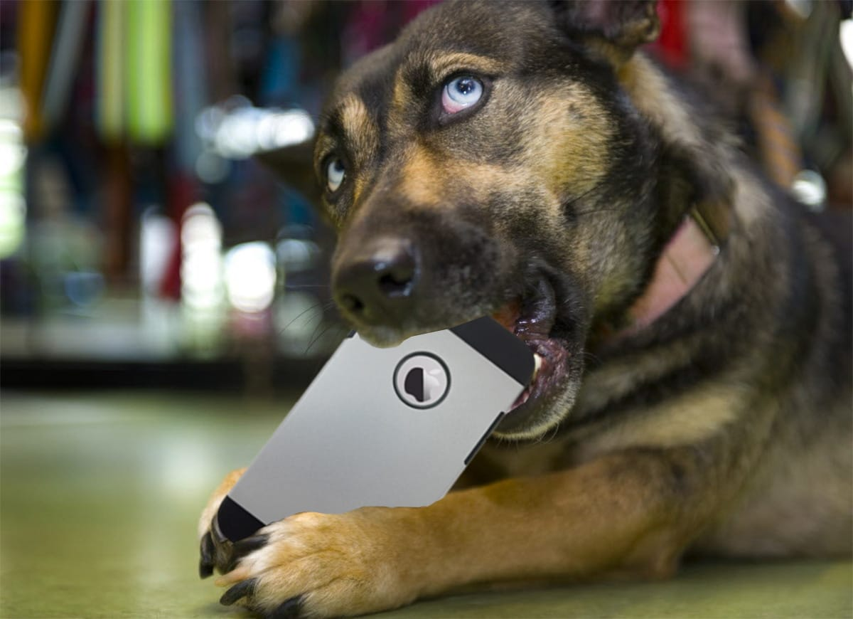 Five Actually, Totally Useful Apps for Pet Owners