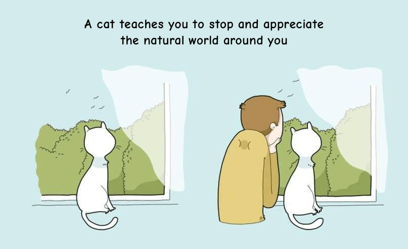 cats love staring out the window