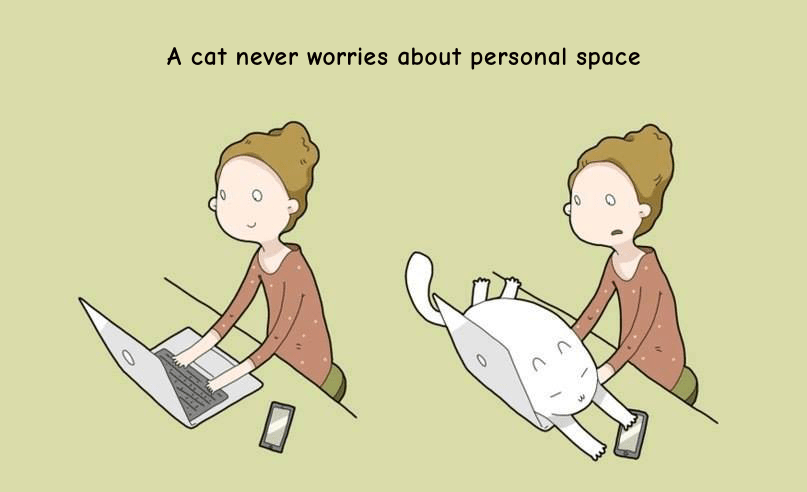cats are all up in your personal space