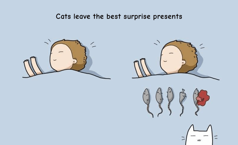 cats love to leave you dead mice at presents