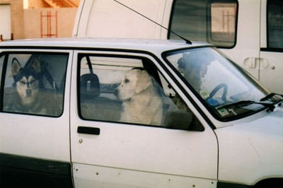Dog Days of Summer: Leaving Pets In Cars