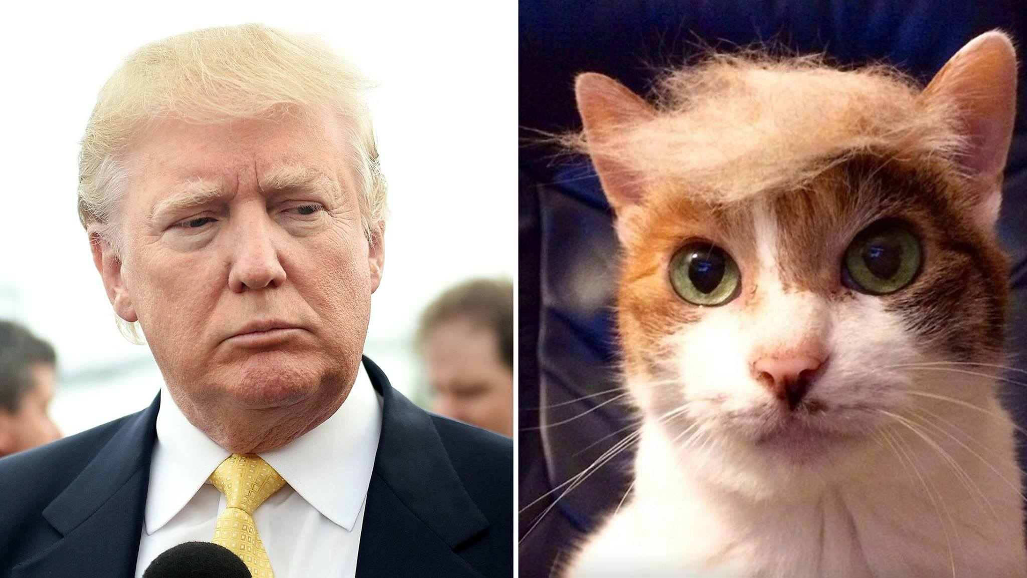 Cats and Dogs rocking Donald Trump's hair