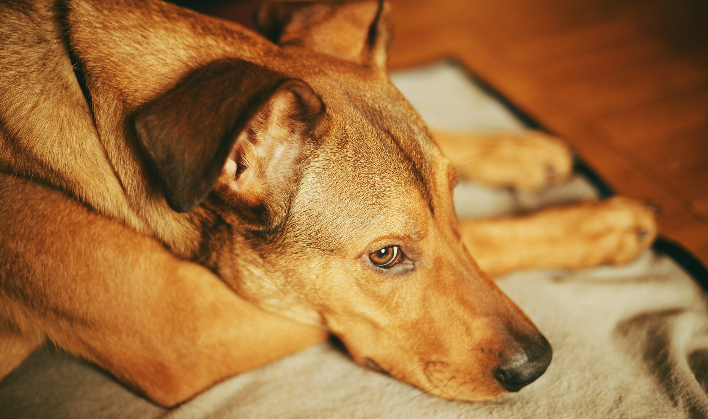 3 Questions You Should Ask Before Buying Pet Insurance
