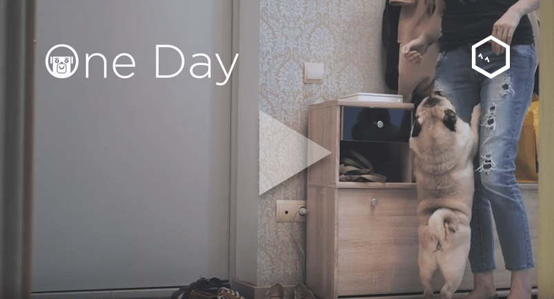 A Day in the Life of a Pug with the Petcube Camera