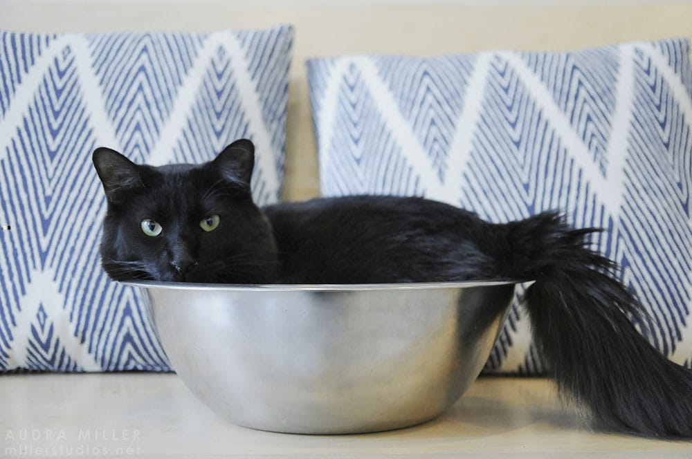 Adopted Cat in a bowl