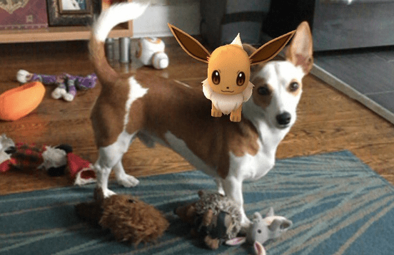 Pets Who Are Terrible At Catching Pokemon