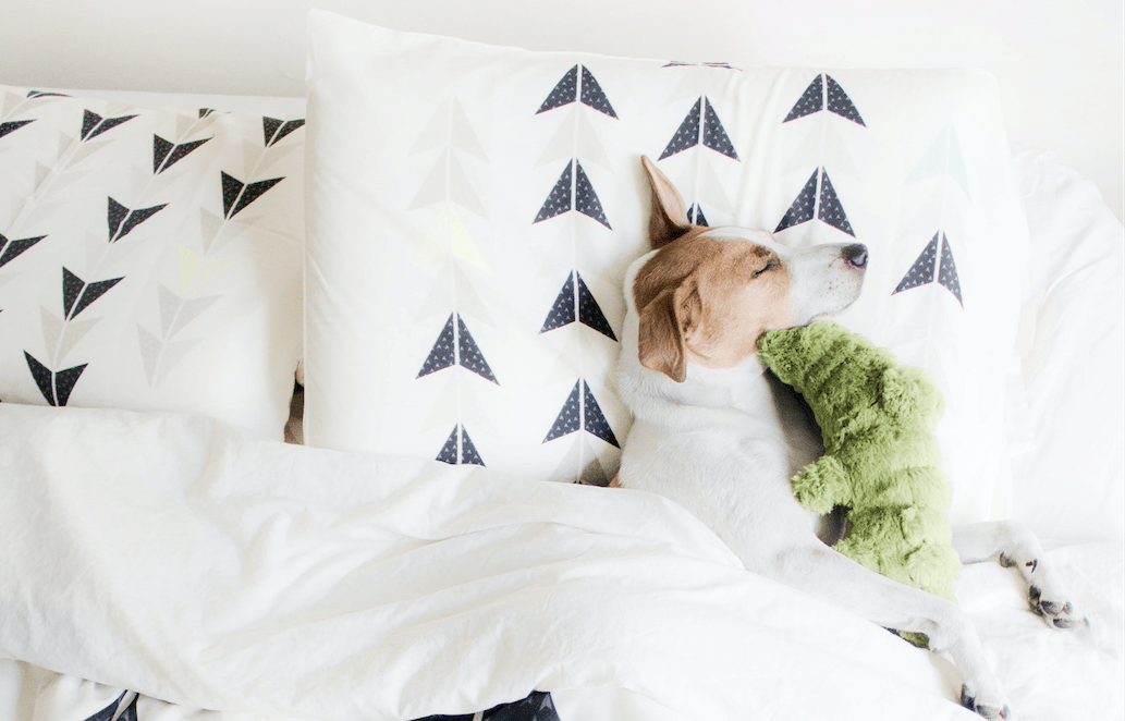 Cat Casas and Dog Decor: Pet-Friendly Bedroom Makeovers