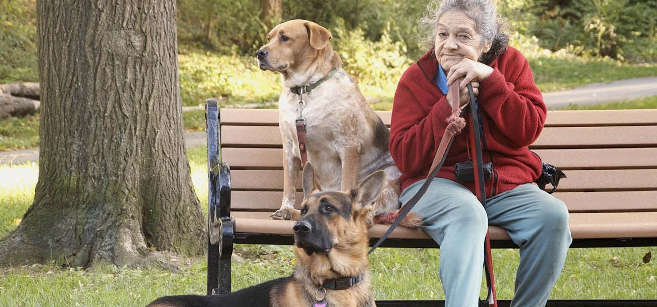 Golden Retrievers and Golden Years: Senior Citizens and Pets