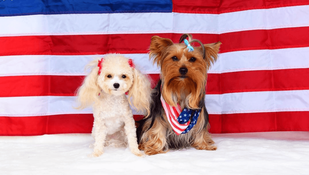 17 Patriotic Pets You Need to See This 4th of July