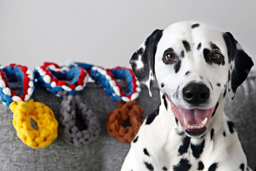 Dalmatian wins medals at the Summer Olympics