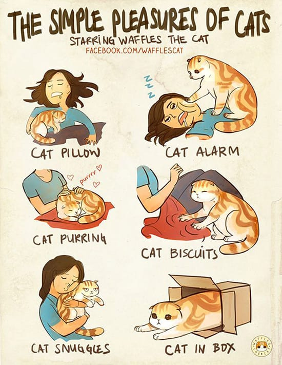 Simple pleasures of cats