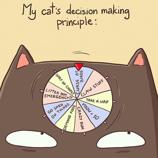 A cat's brain is like a spinning wheel game