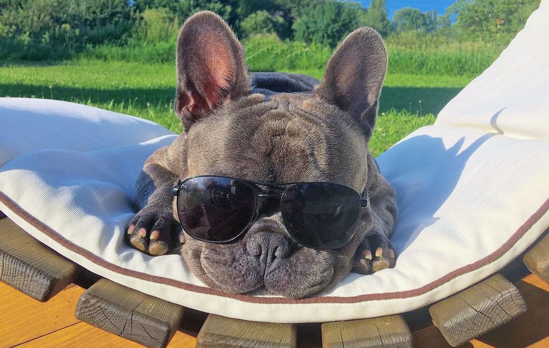 13 Reasons Why BalouBlue is the Chillest Dog in Town