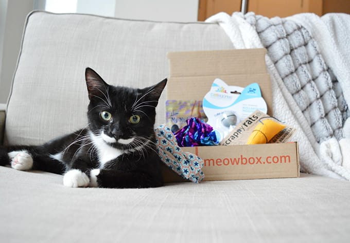MeowBox box for cats
