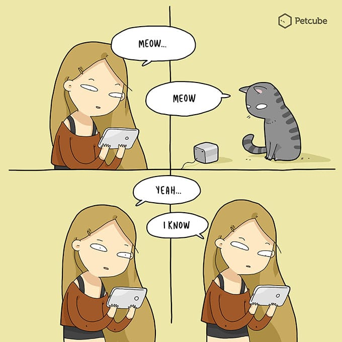 Talking with your cat using pet camera | comics