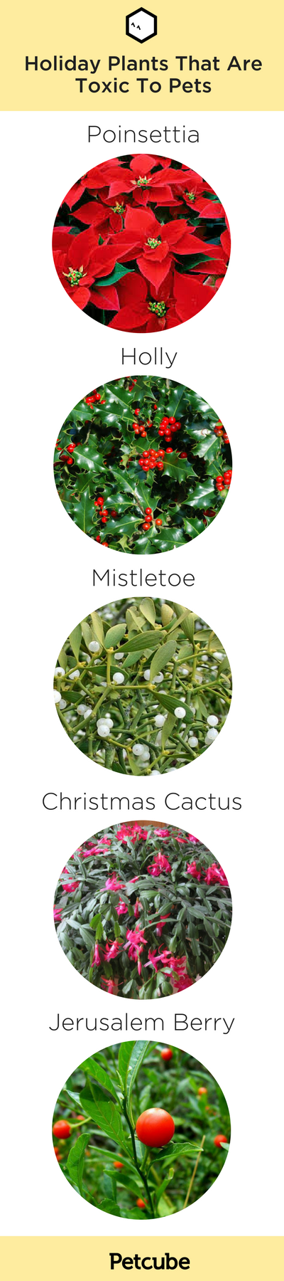 Infographic showing holiday plants that are toxic to pets