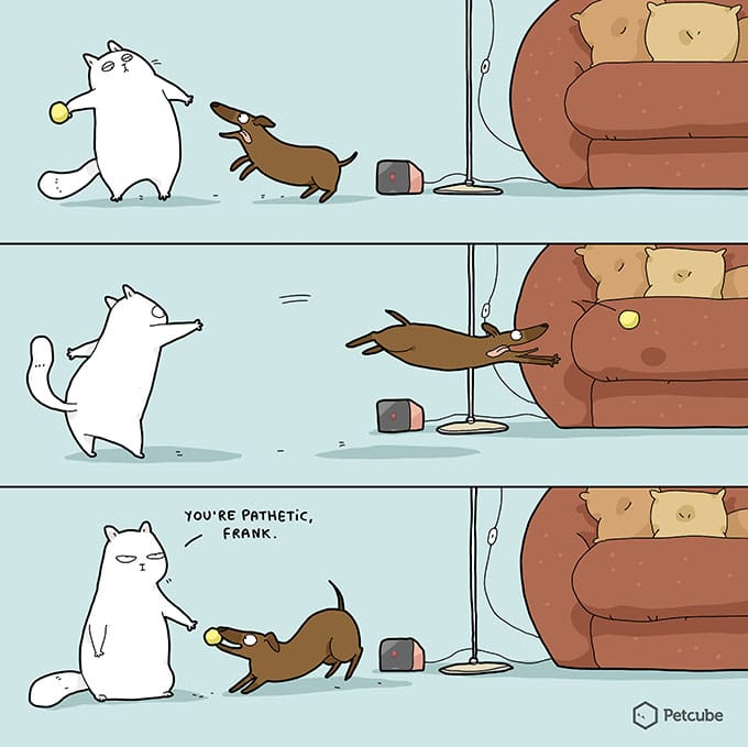 Animals playing ball | comics