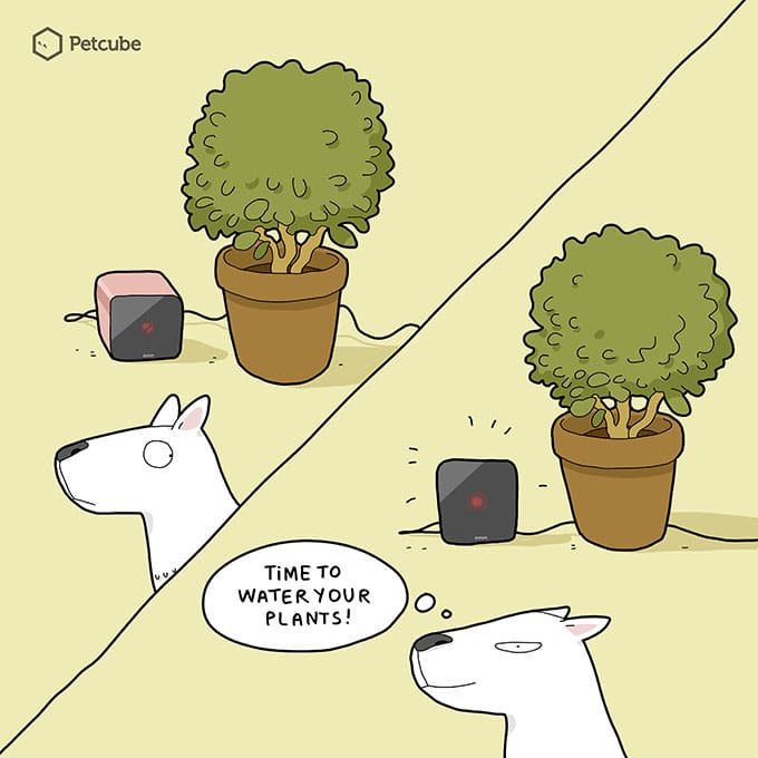 Dogs and Plants comics