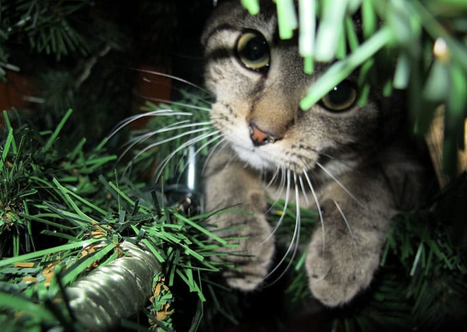 Photo of a cat hiding under a Christmas tree