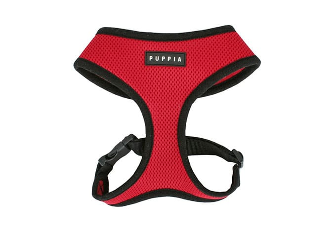 harness for senior pets
