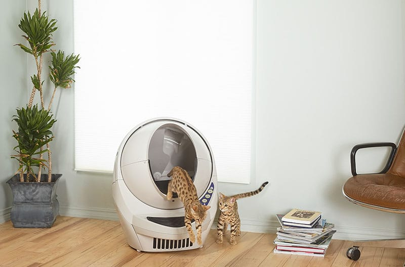 Image of a two cats and the Litter Robot