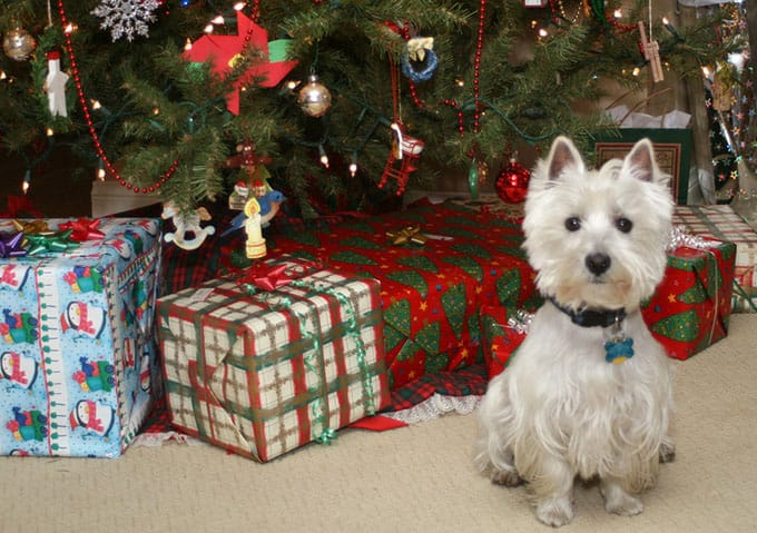 Photo of a dog sitting in front of a Christmas tree
