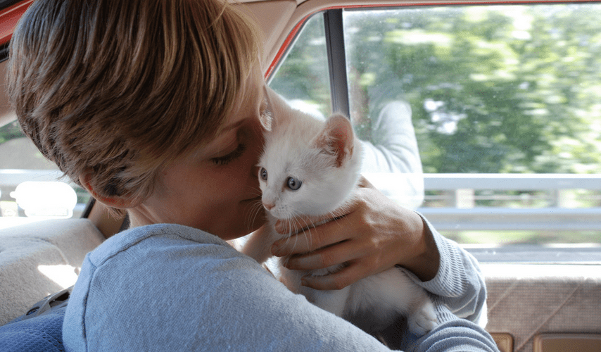 How to Know If Your Cat Loves You