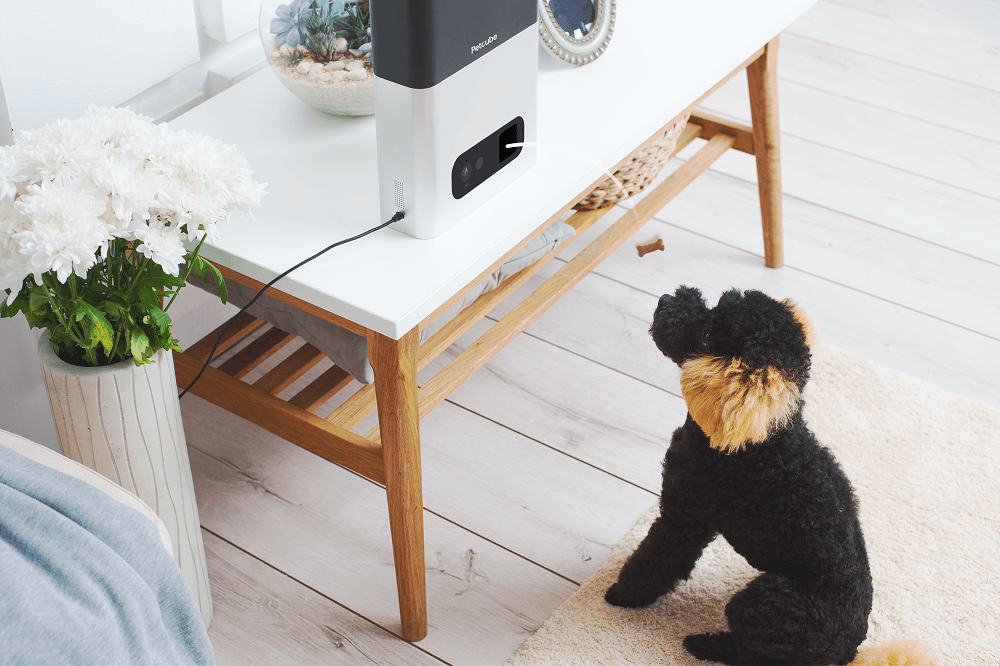 Pet Treat Cameras: a Hit for You and your Pet!