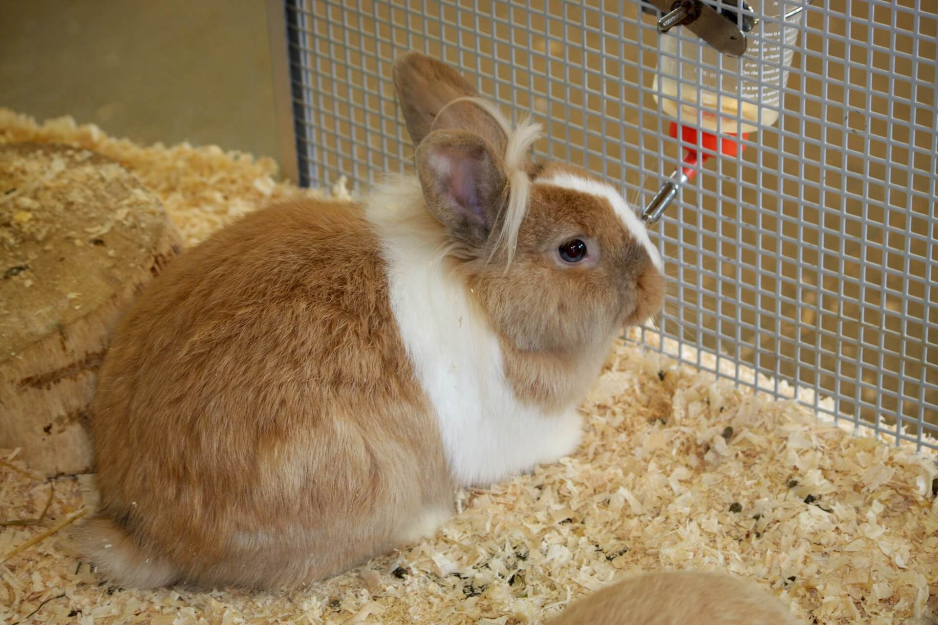 Can You Use Shredded Paper For Rabbit Bedding