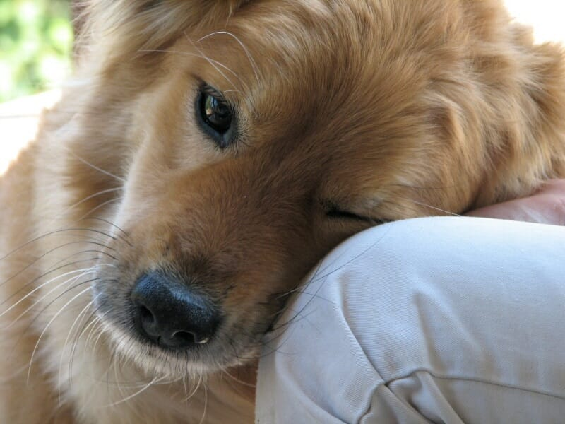 How Much Do You Love Your Pet? We Found Out...