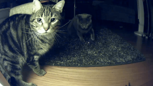 two cats caught on camera