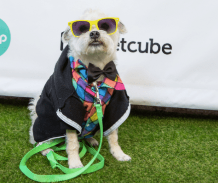 12 Famous Austin Insta-Pets You Need To Follow Right Now