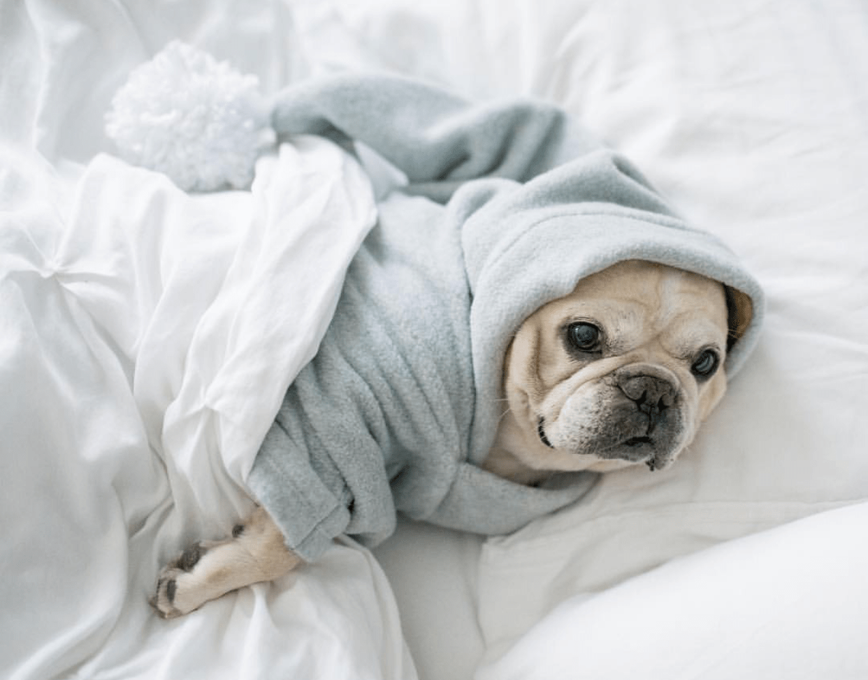 10 Dogs Who Are Totally Living the Snug Life