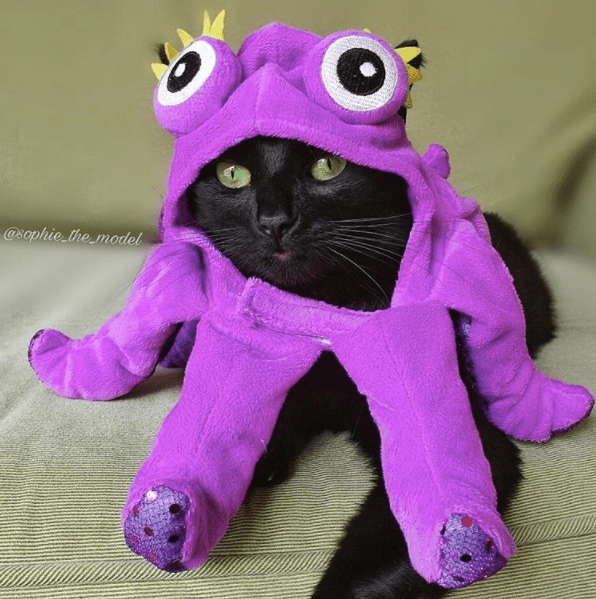 13 Cats Dressed As Other Animals
