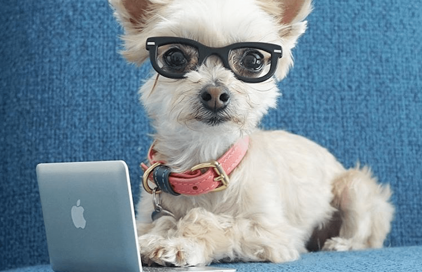 Tax Advice From Pets