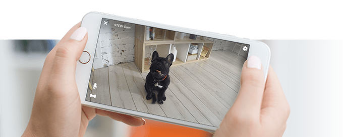 Stay connected to your pet remotely from your smartphone