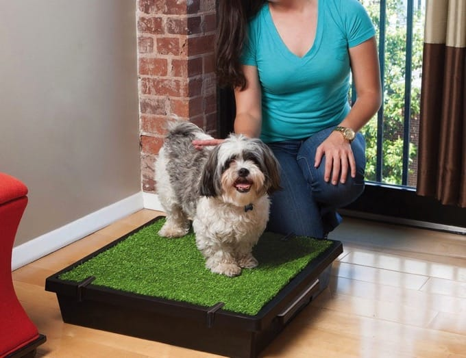 PetSafe Portable Pet Potty