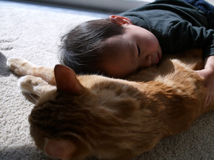 Cute baby boy sleeps with a cat