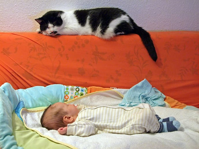 Cat sleeping with a baby