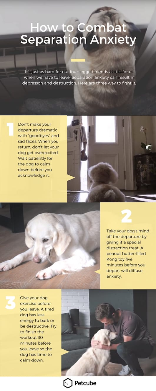 how to help dog separation anxiety