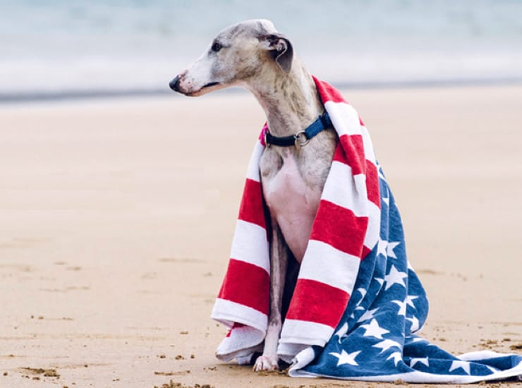 Do You Know Your Official State Dog?