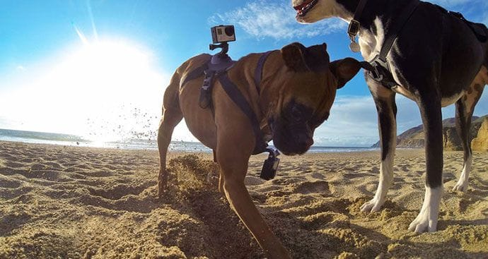Dog GoPro Camera Harness