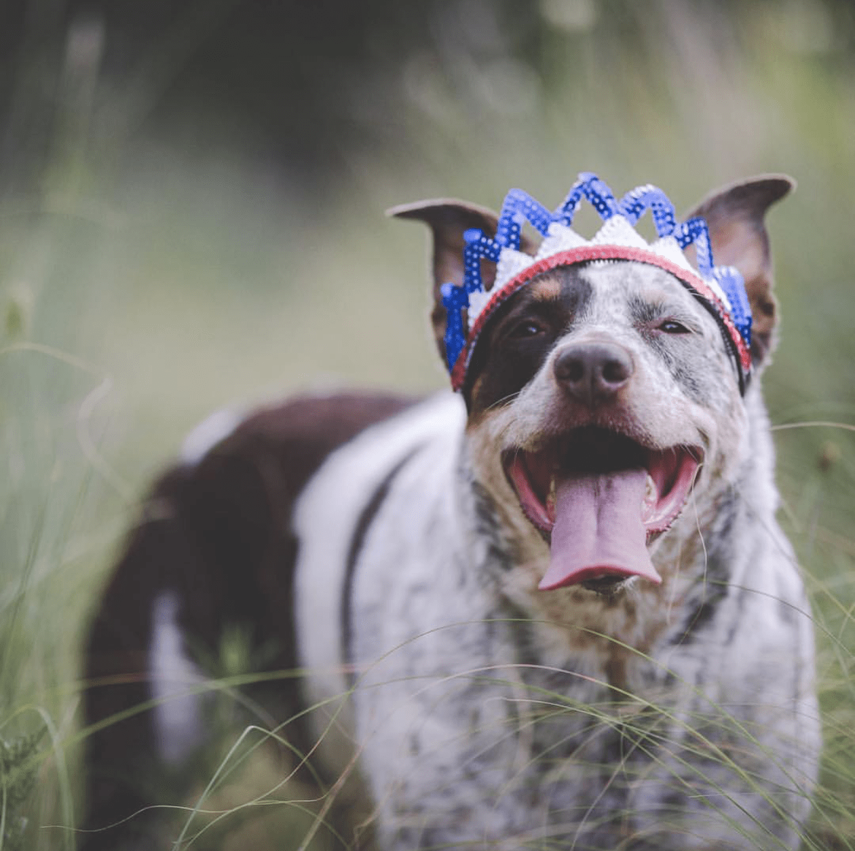 Independence Day Pet Safety Checklist