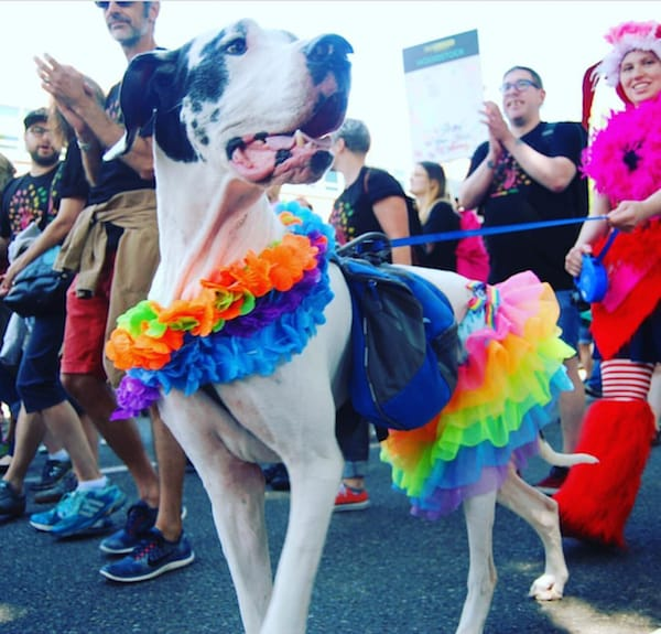 best dressed pride dog