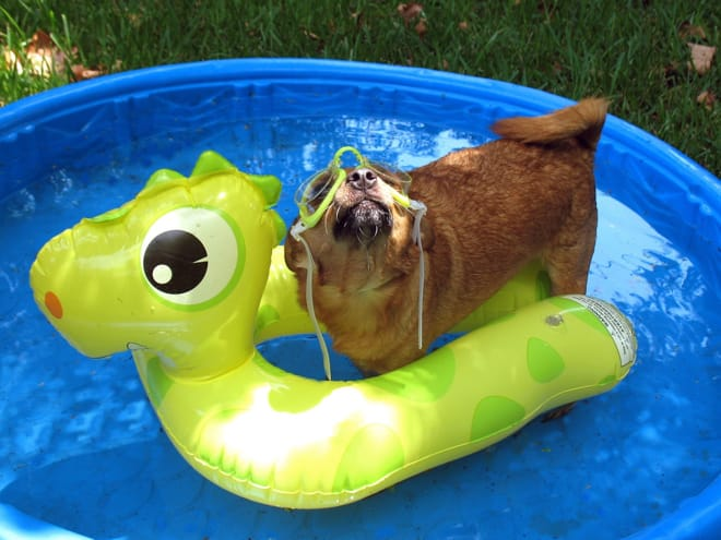 dog in a wading pool