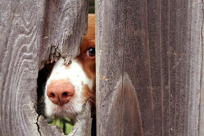 Picture of a dog behind a fence