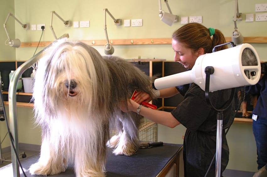 How To Find The Best Dog Groomer