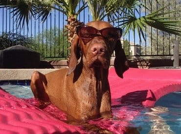 10 Hot Tips To Keep Your Pet Safe This Summer